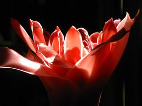 Colour Nature Opens