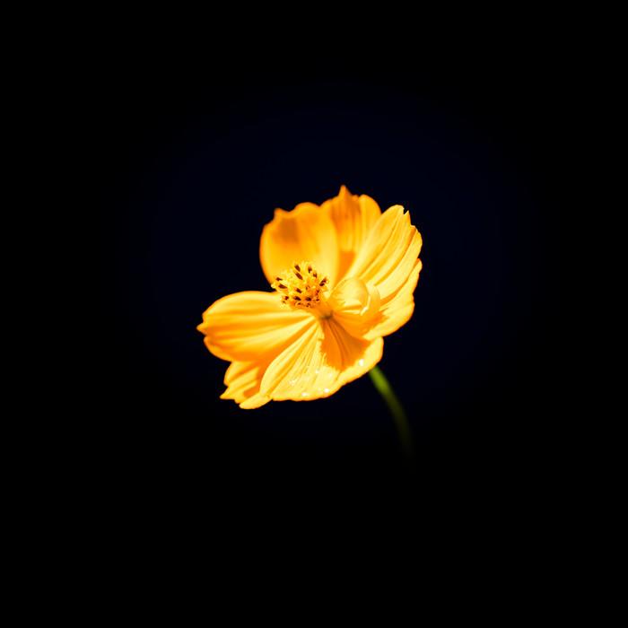 Random flower.jpg