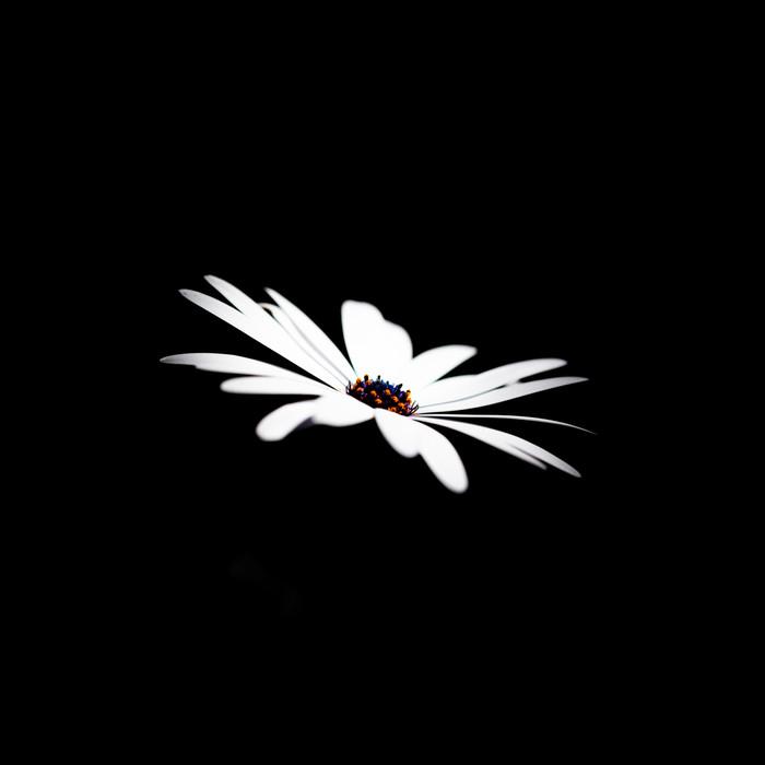 Flower White 20191027.jpg