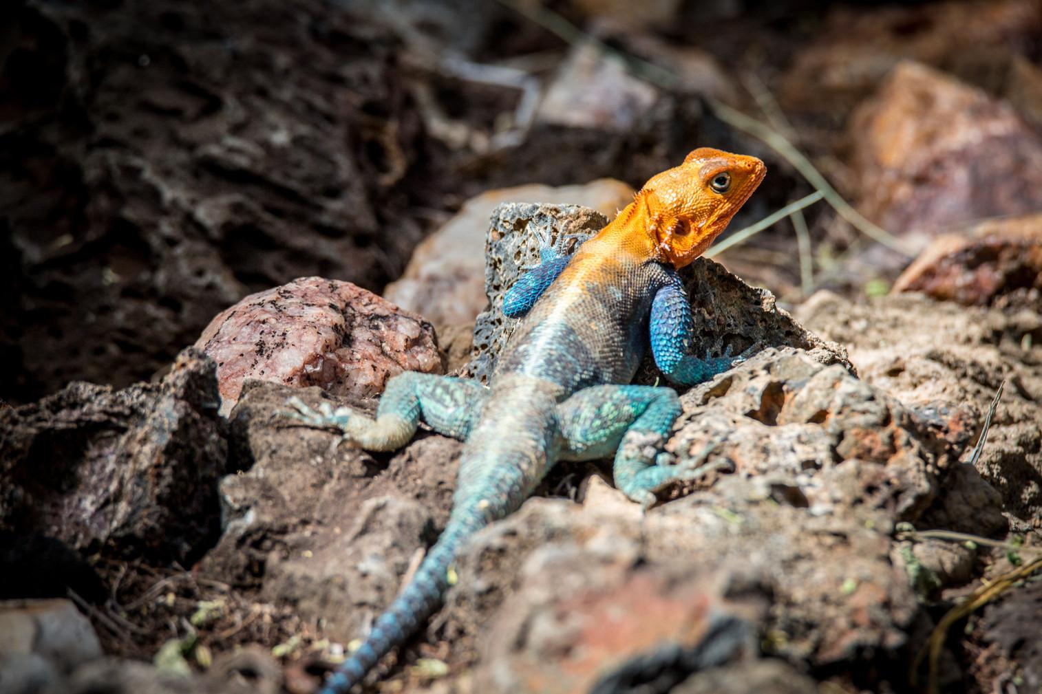 Nakuru Reserve, Kenya