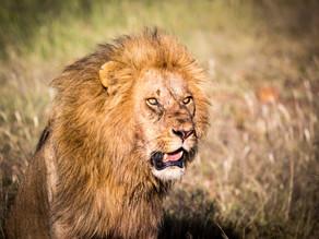 Animal Attraction in Kenya