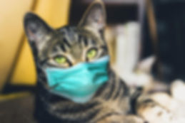 Cat-Wearing-COVID-19-Mask.jpg