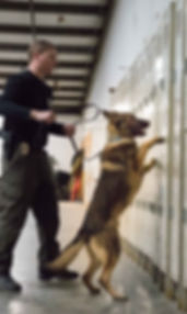 K9 dog canine training