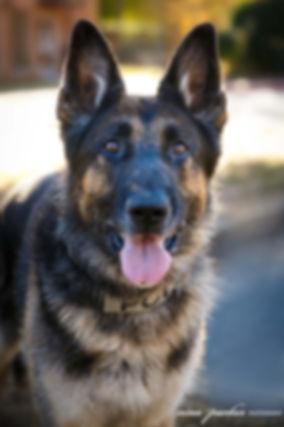 Police Dog Grants