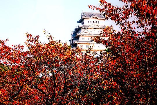 Himiji Castle h.70 x br.105cm_edited.jpg