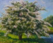 Hawthorn-Fairy-Tree.jpg