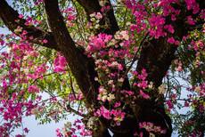 Primavera na Primavera - 2020. Foto: @bru.fotosedesign