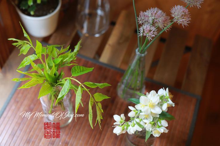 Chinese Toon Tree — 香椿三吃