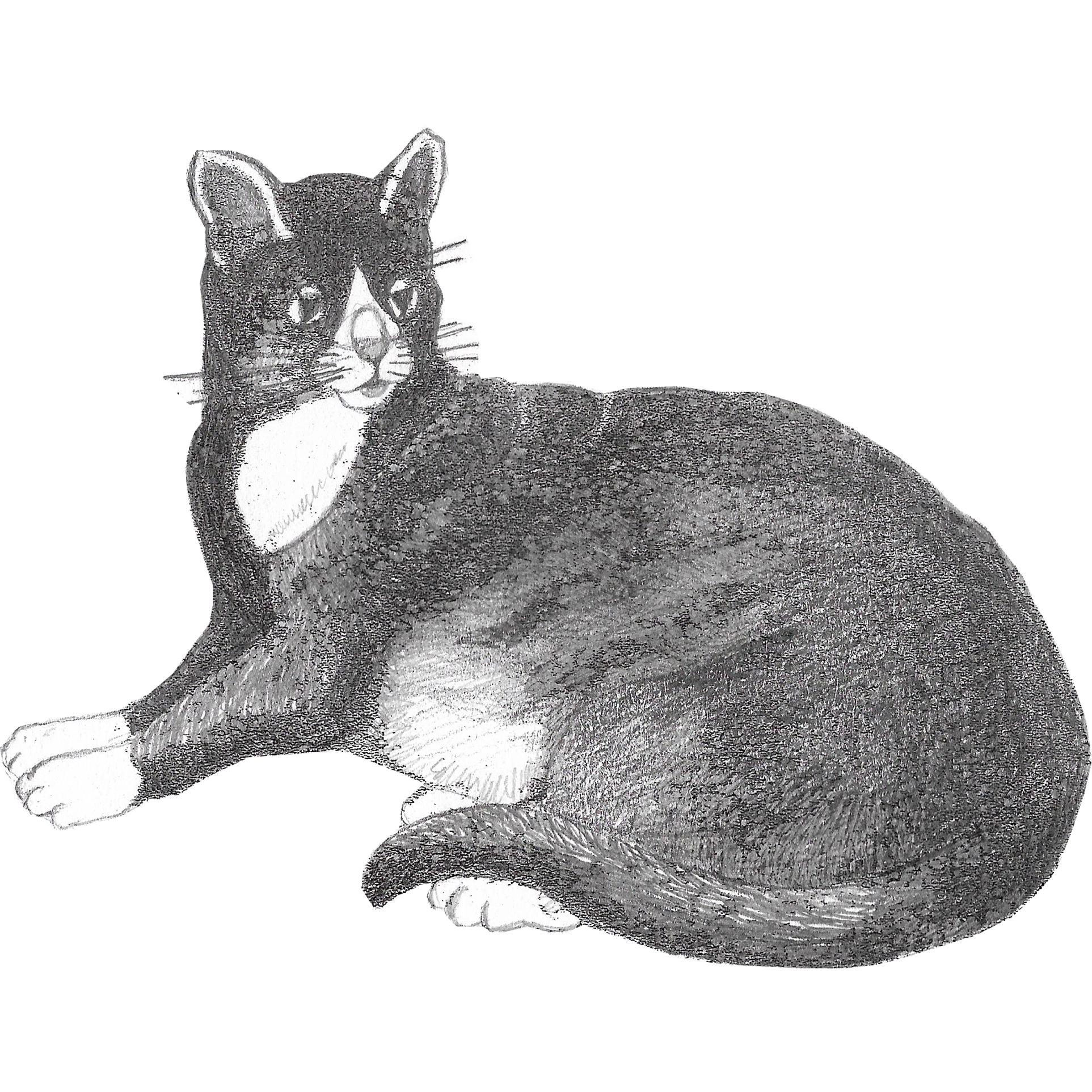 Forbilde katt 2 side 4
