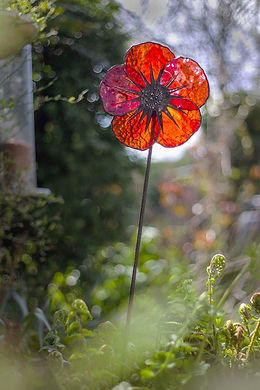 red poppy in garden 2.jpg