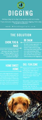Dog Trainer | How-To