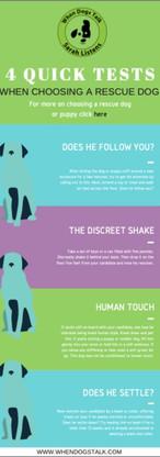 Dog Adoption | Guide