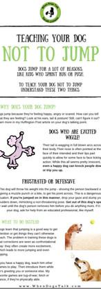 Dog Trainer | Tips