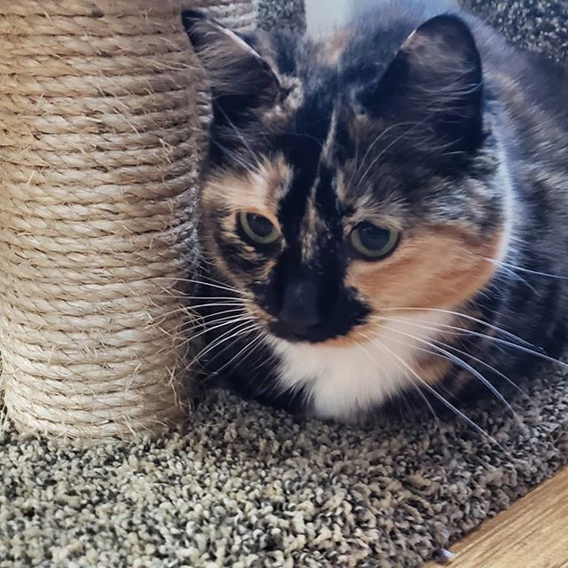 Melt my heart #caturdaymorning #kissythecat #unclecatsits #jayismyfavoritecatsitter #berkeleycats #c