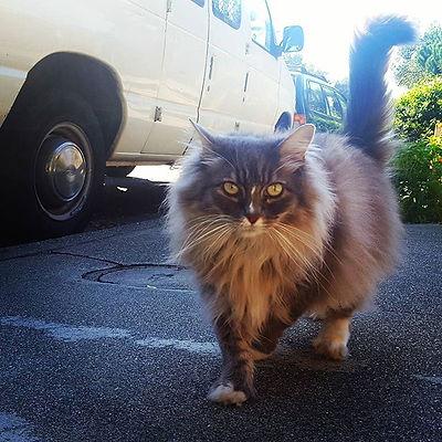 Sam #oaklandloveit #oakland #catsitting #ohmy #thisguy #gardenlife #gardencat #bestmeow #bestcats_in