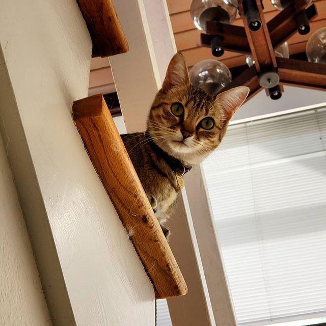 Flora #jayismyfavoritecatsitter #catsitlife #unclejaycatsits #alldayeveryday #cats #berkeleycats #fo