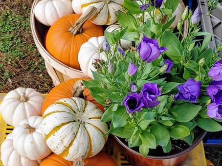 October 9 Market Day