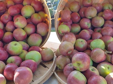 Market Day September 18