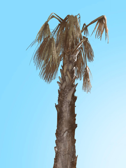 Faded Palm