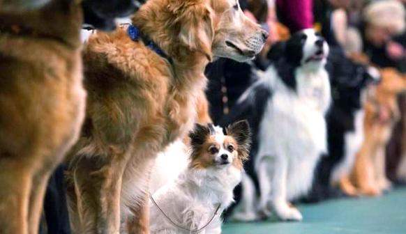 Собаки.png