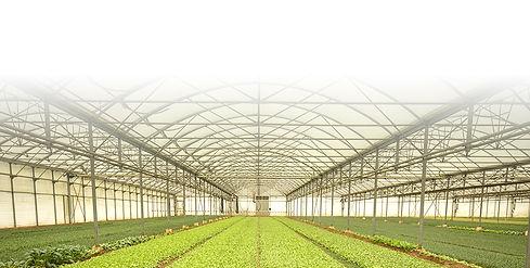 long plant-NEW.jpg