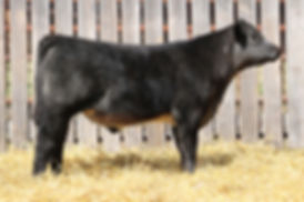 Lot 7 Monpoly Son Steer Small File.jpg