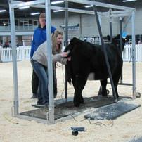 Northlands Farm & Ranch Show 2015 Cattle Clinic (2).jpg