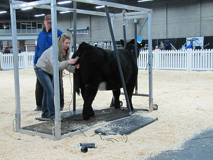 Northlands Farm & Ranch Show 2015 Cattle Clinic