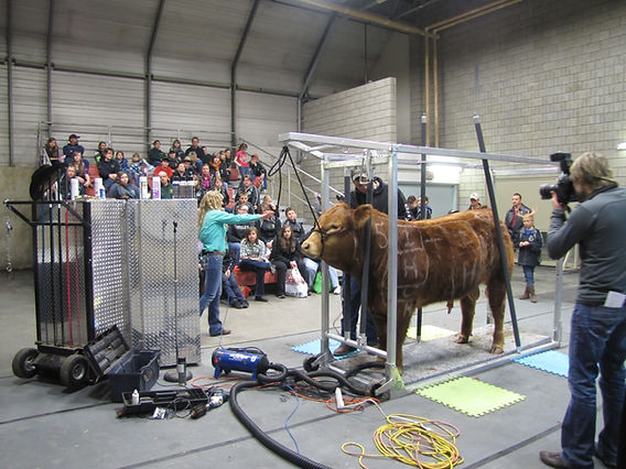 Cattle Clinic Northlands Farm & Ranch Show 2013