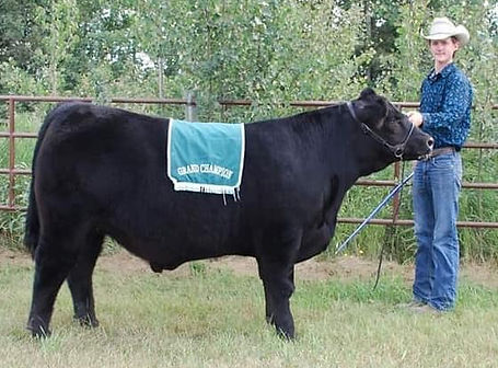 Monopoly Grand Champion 4-H Steer