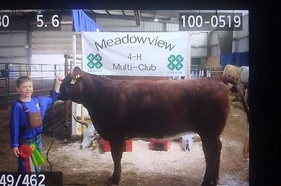 Club_Champion_Commercial_Heifer_and_Rese