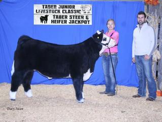 Lot 2 From Fall Prospect Sale Wins Reserve Champion at Taber