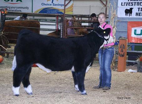 Carpe Diem Eye Candy Steer Reserve Champion Open Jackpot Steer Taber Junior Livestock Classic