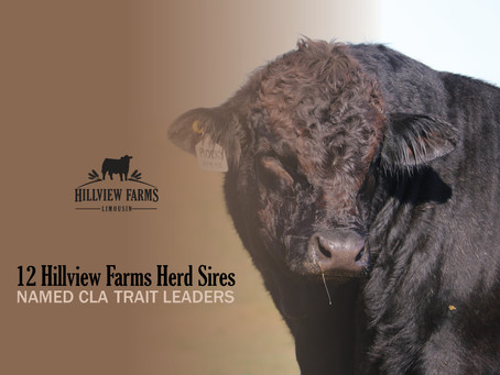 HILLVIEW SIRES NAMED LIMOUSIN TRAIT LEADERS