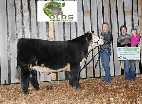 Monopoly Money Reserve Grand Champion Heavy Weight Steer Olds Spring Classic