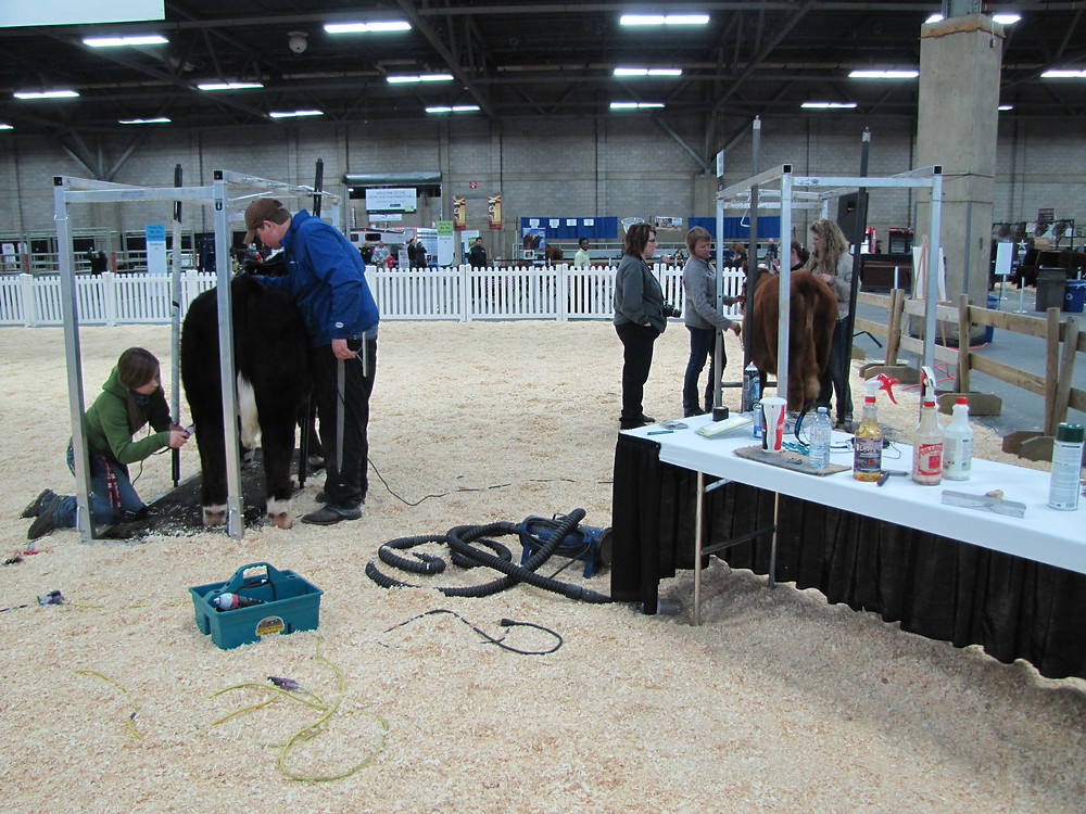 Northlands Farm & Ranch Show Clinic