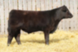 Lot 6 Monopoly Son Steer Small File.jpg