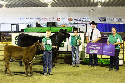 Bandit Reserve Champion Open Steer at UFA Country Classic