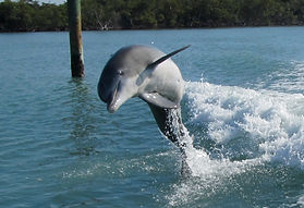 Naples Fishing Charters, Florida, Sightseeing Naples Florida, Dolphin watching Naples