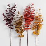 WM eucalyptus fall stem.jpg