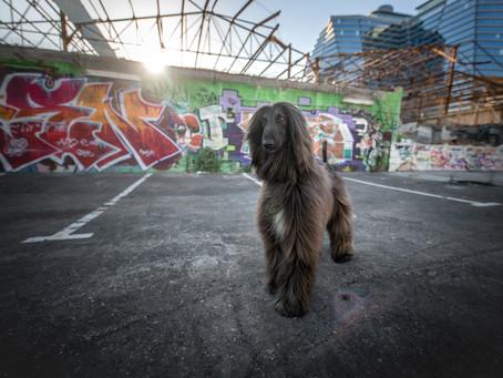 צילום כלבים בשנת 2020