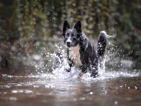 לבחור עדשה לצילום כלבים