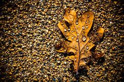 seasons change 2013 © dennisanthony.jpg