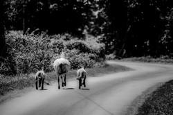 the open road 2013 © dennisanthony.jpg