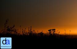landscapes -  2013 dennisanthony ©12.jpg