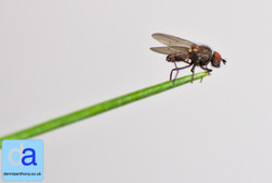 insects -  2013 dennisanthony ©03.jpg