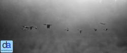 transient flight.jpg