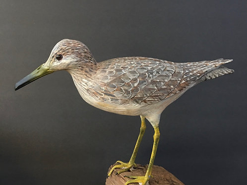 Greater Yellowlegs (shorebird)