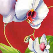 5058L White Orchid on Crimson
