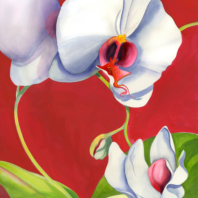 5058L White Orchid on Crimson